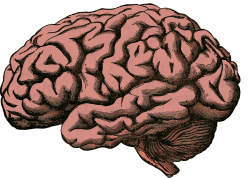 brain-5